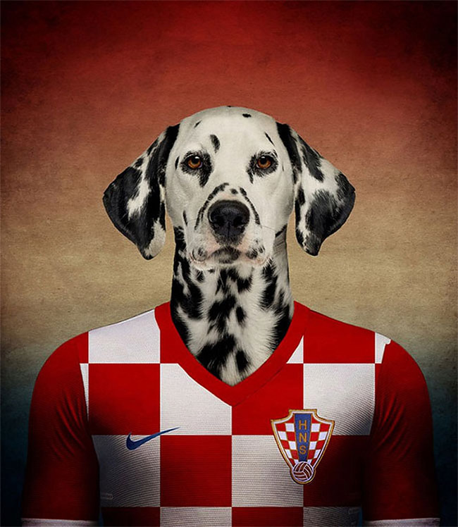 780 Dogs Of Word Cup Brazil 2014