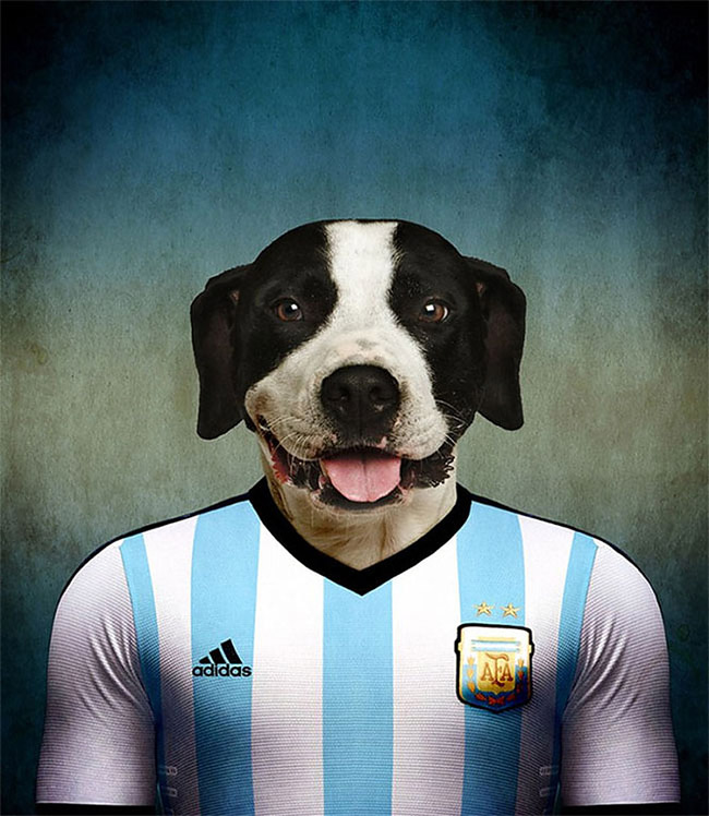 966 Dogs Of Word Cup Brazil 2014