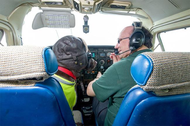 293 British Pet Dog Gets Co Pilot License