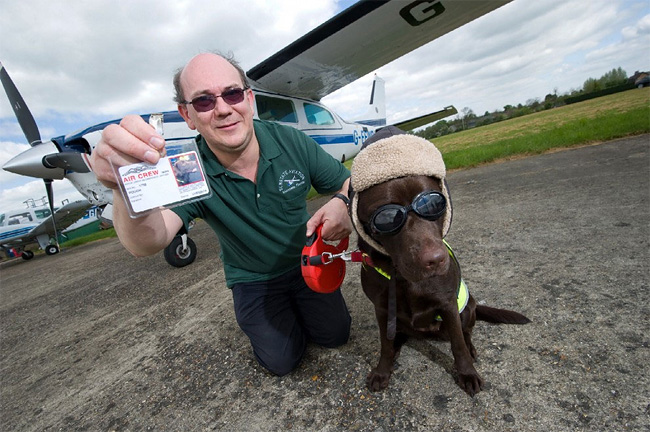 640 British Pet Dog Gets Co Pilot License