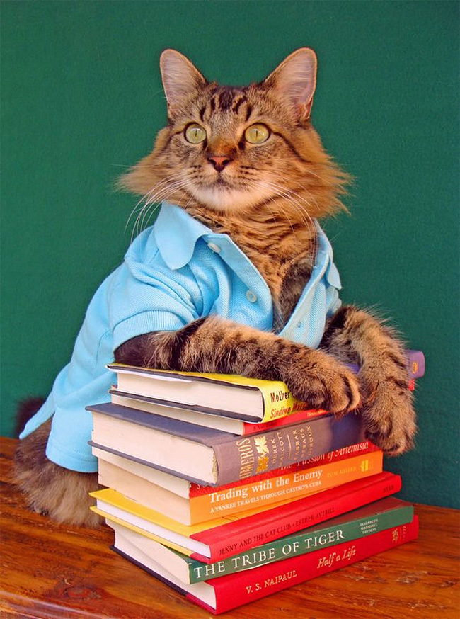 1048 Lorenzo The Cat by Joann Biondi