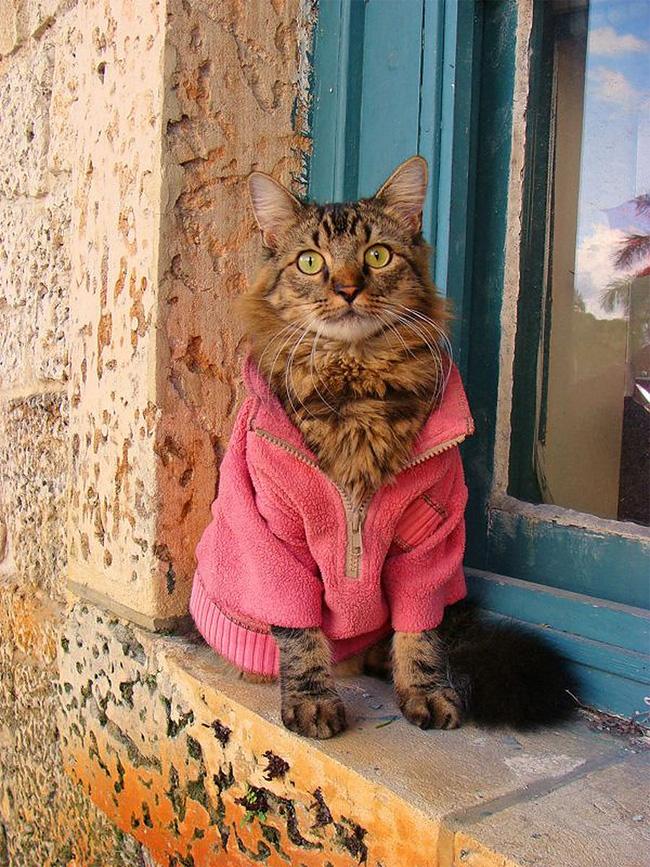 768 Lorenzo The Cat by Joann Biondi