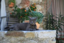Small-IMG_0494