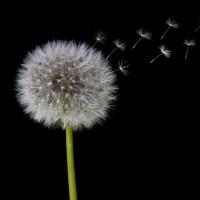 Principe Taoïste : La Respiration
