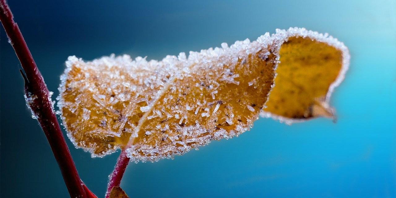 Les cycles et les saisons