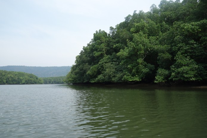 Andaman creek with Mangrove forest