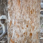 Pench National Park – Birds and Bisons