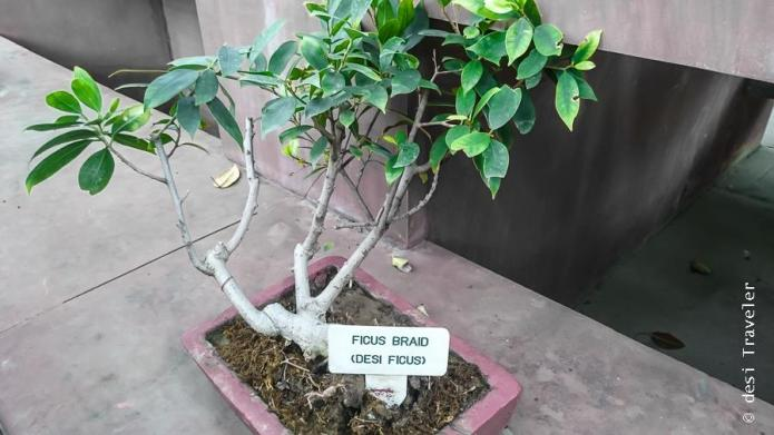 Bonsai Mughal Garden