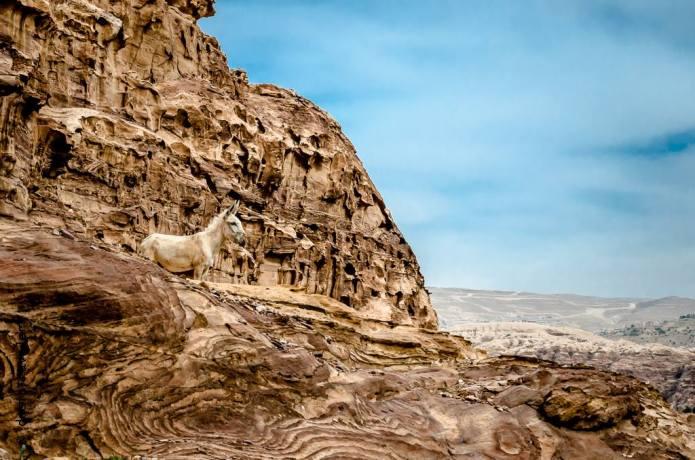 Solo Donkey Traveler Petra Jordan