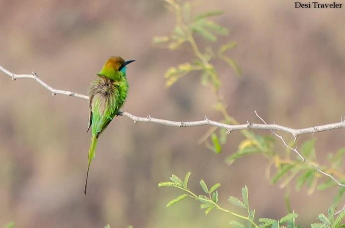 Nagarjuna Sagar for Birdwatching