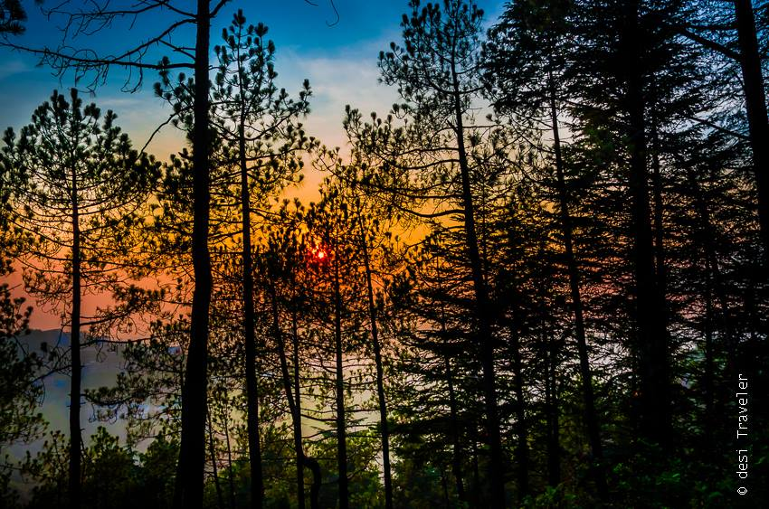 Colorful Sunset behind Pine Trees Shogi Himachal Pradesh
