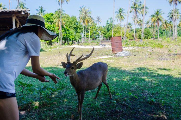 Girl feeding Deer Thailand
