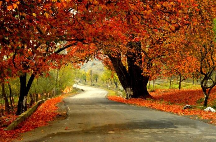 Autumn colors in Kashmir India