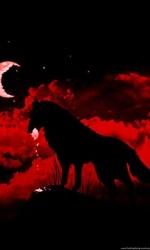 wolf moon blood hd backgrounds background desktop