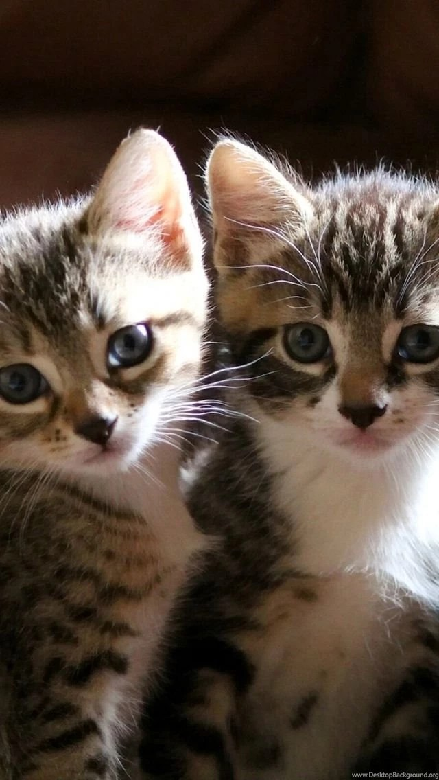 Download Wallpapers 640x1136 Kittens, Cute, Striped