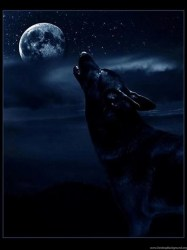 Dark Wolf Wallpapers New Wallpapers