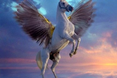 Creatures Mythical Pegasus White Wallpapers Desktop Background