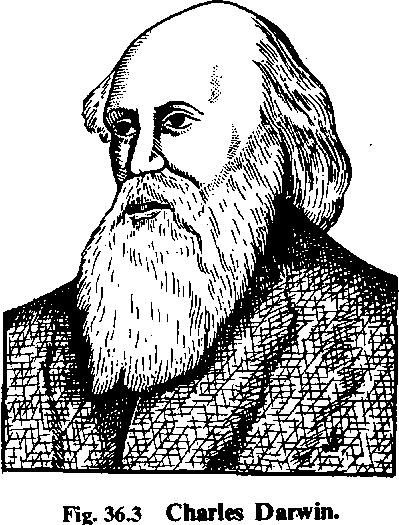 Evolution (10th-Biology-Chapter-18)