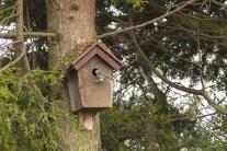 vogelhuisje dichtbij (2)