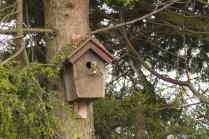 vogelhuisje dichtbij (3)