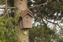 vogelhuisje dichtbij (6)