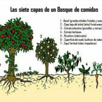 Estableciendo Bosques Comestibles por GEOFF LAWTON - Doc. Subt. Esp.