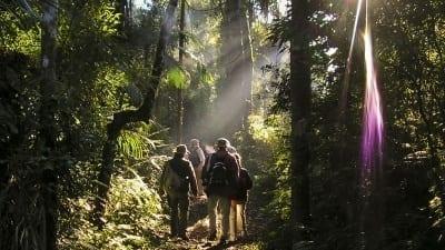 5a6220d02c0ba 400x225 - La Selva Misionera, destacada como productora de vida para generaciones futuras - Télam