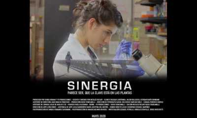 SINERGIA Disponible en YouTUbe