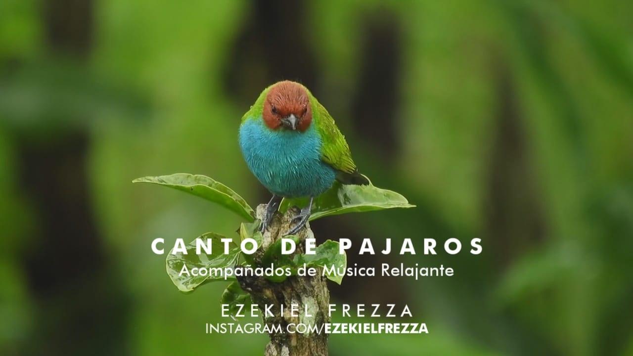 CANTO DE PÁJAROS Soothing Relaxing Nature Sounds Study Sleep Meditation ALPHA WAVES 2020
