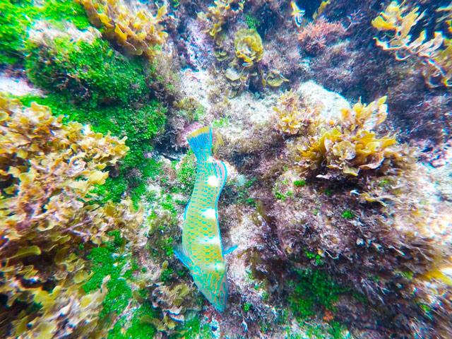 Trilhas em Fernando de Noronha - piscina Natural