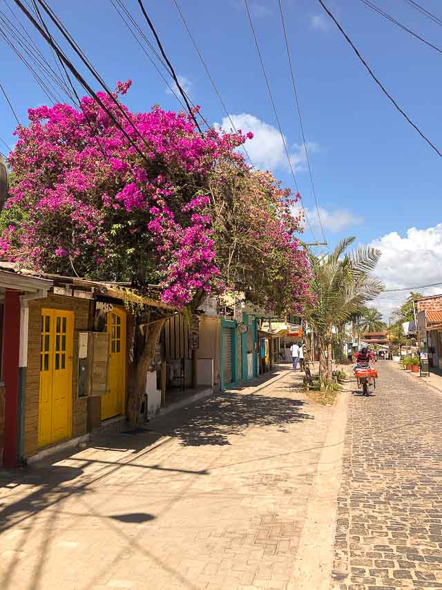 Rua da Pituba, Itacaré - Bahia