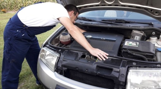 how-to-keep-animals-out-of-your-car-engine-make-regular-check-ups