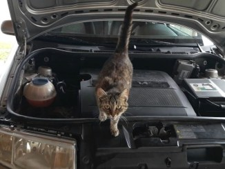 how-to-keep-animals-out-of-your-car-engine