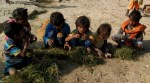 Hungry Kids Seen Eating Grass in Modi's Constituency