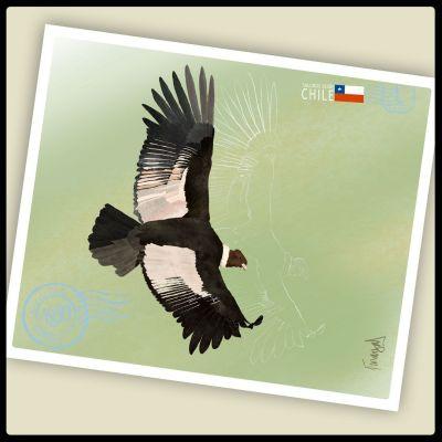 Postal Condor