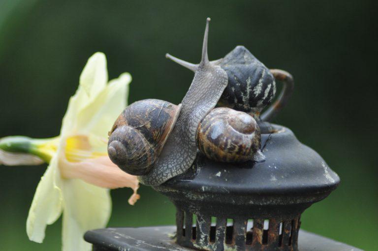 Couple escargots