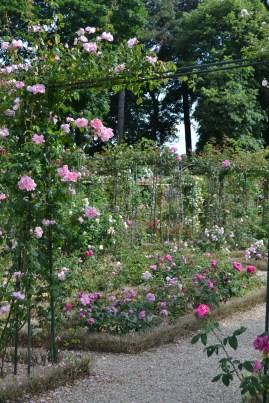 Allée de la Roseraie du Val de Marne
