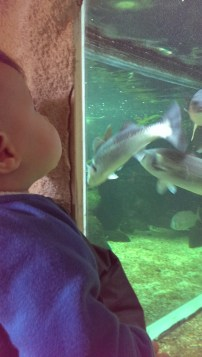 Aquarium de Noirmoutier @desperatecouchpotatoe