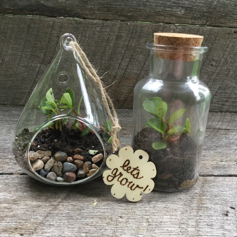 Succulent Garden Gift Ideas| Terrariums