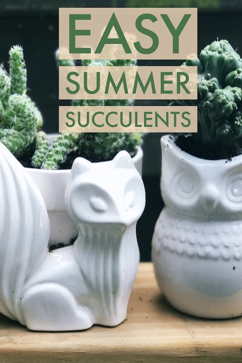 Easy Summer Succulents and Quirky Pots via Desperately Seeking Gina
