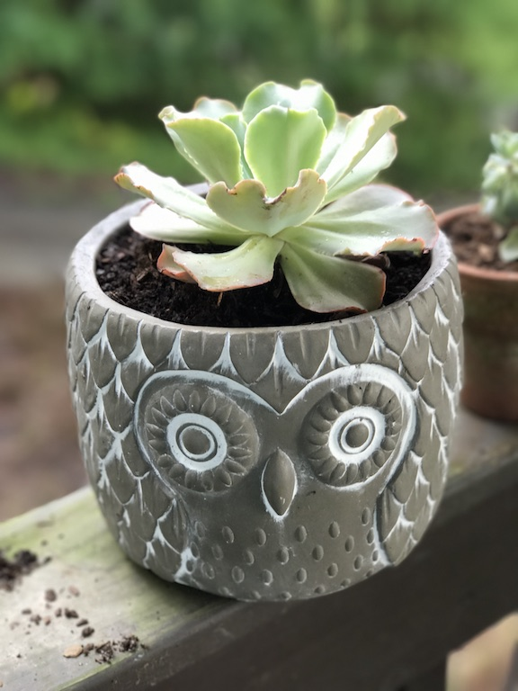 Easy summer succulents that are fun and easy to maintain, even for the most novice of gardeners.