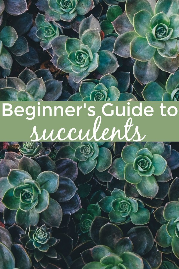 Beginner's guide to succulents for growing and maintainting a beautiful succulent garden