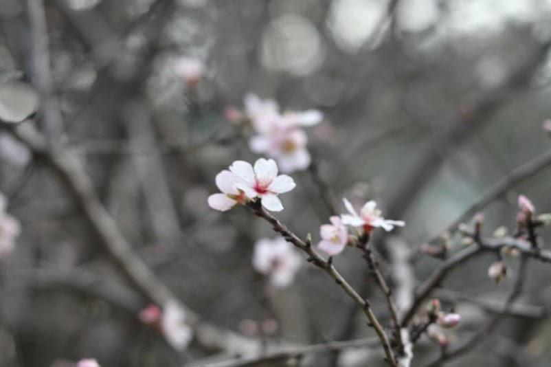 despierta afrodita mujer florecer