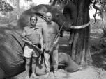Elefante cacería