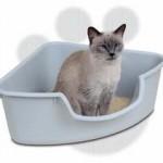 Nisip pentru pisici, litiera pisicii in fosa septica
