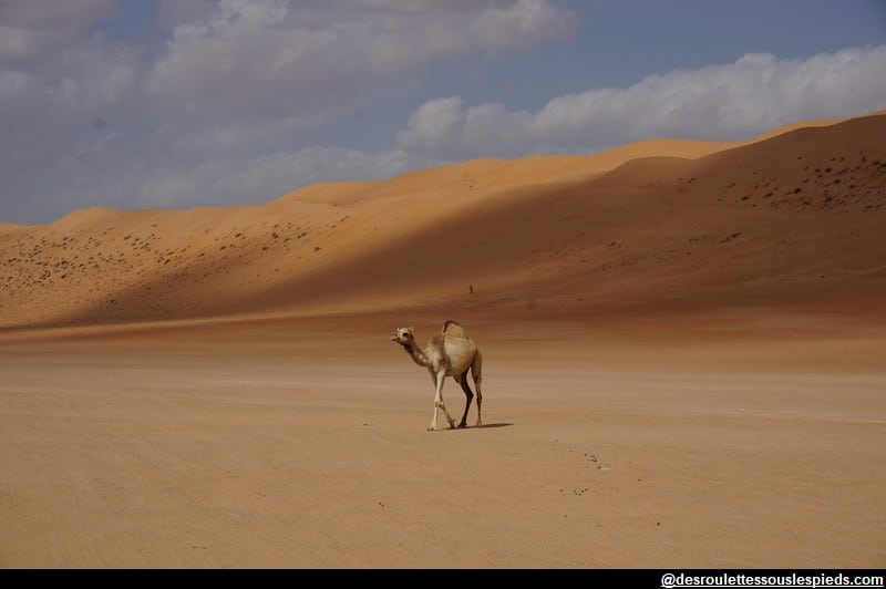 Sultanat-Oman-désert