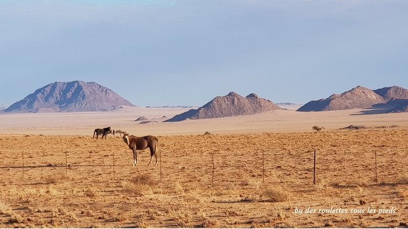 road trip Namibie chevaux du désert