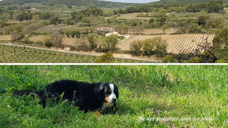 visiter une oliveraie en provence le domaine