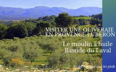 Visiter une oliveraie en Provence : oleotourisme chez Bastide du Laval