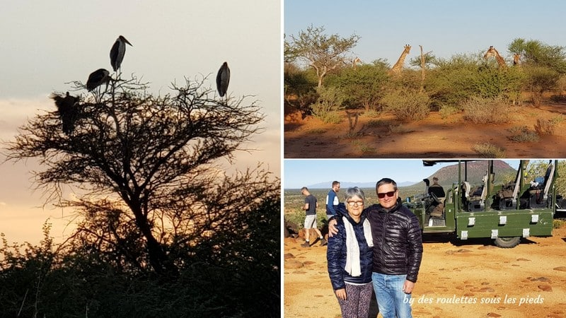 safaris en namibie game drive sundown